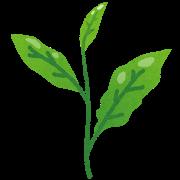 tea_leaf_chaba