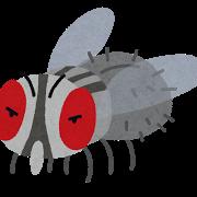 bug_hae