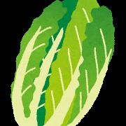 白菜の保存方法 長持ちさせるには?冷凍できるってホント?